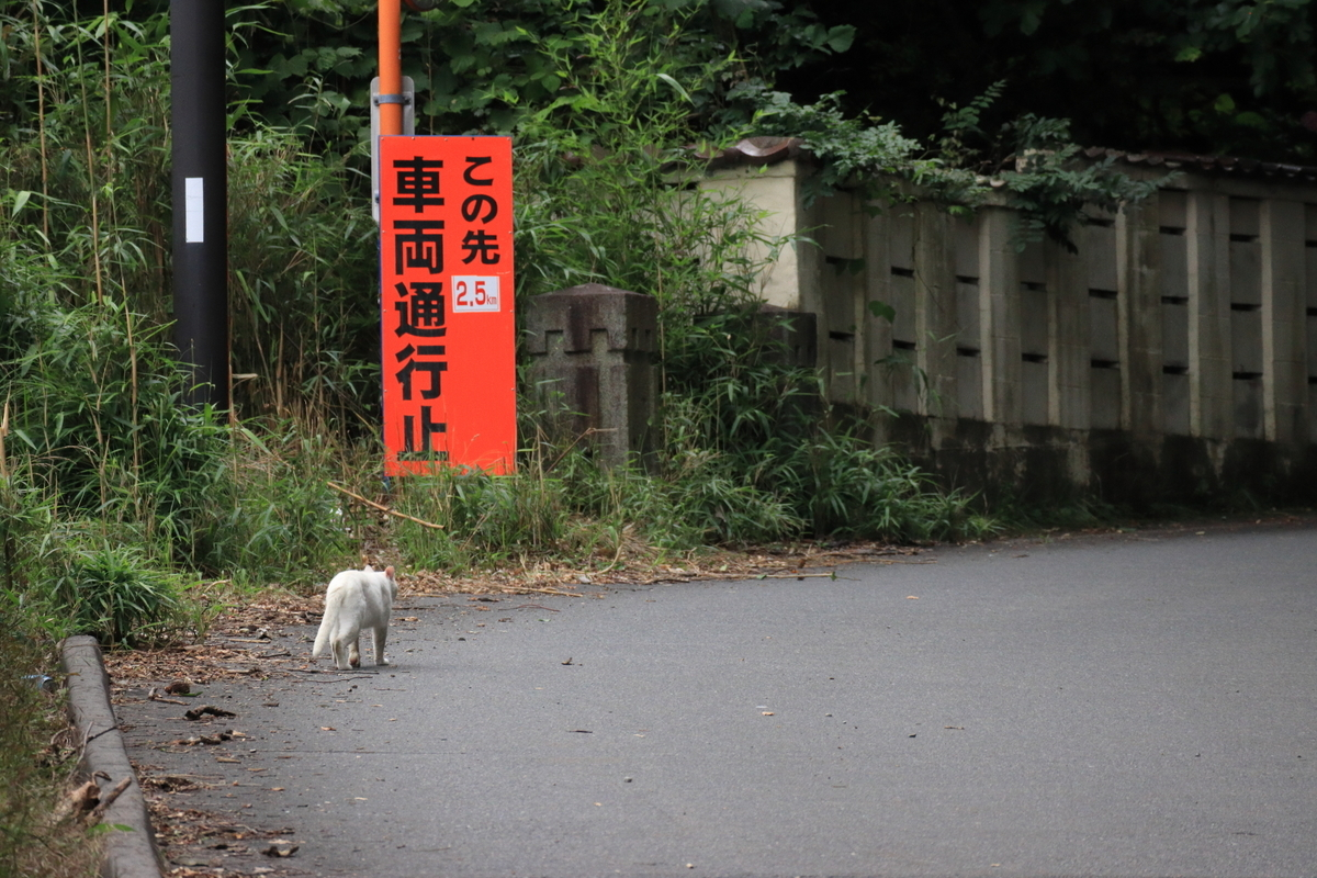 f:id:katayoku_no_hito:20200723172434j:plain