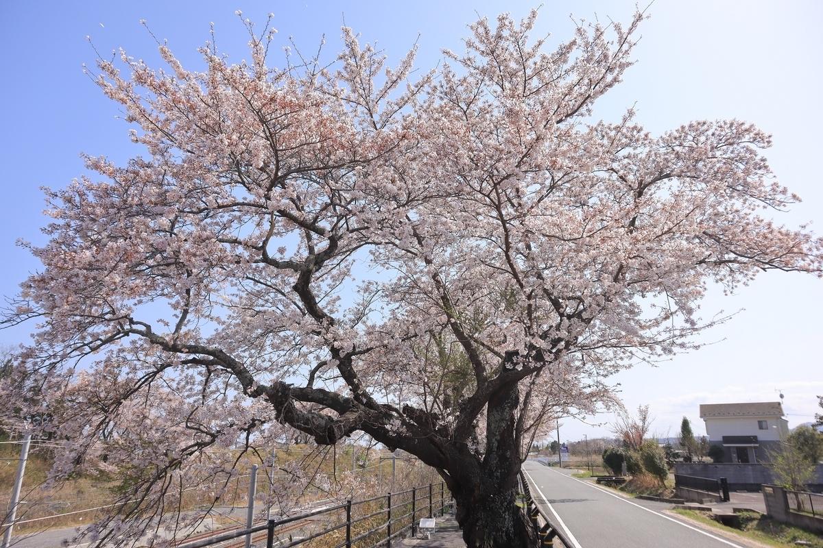f:id:katayoku_no_hito:20210403132036j:plain