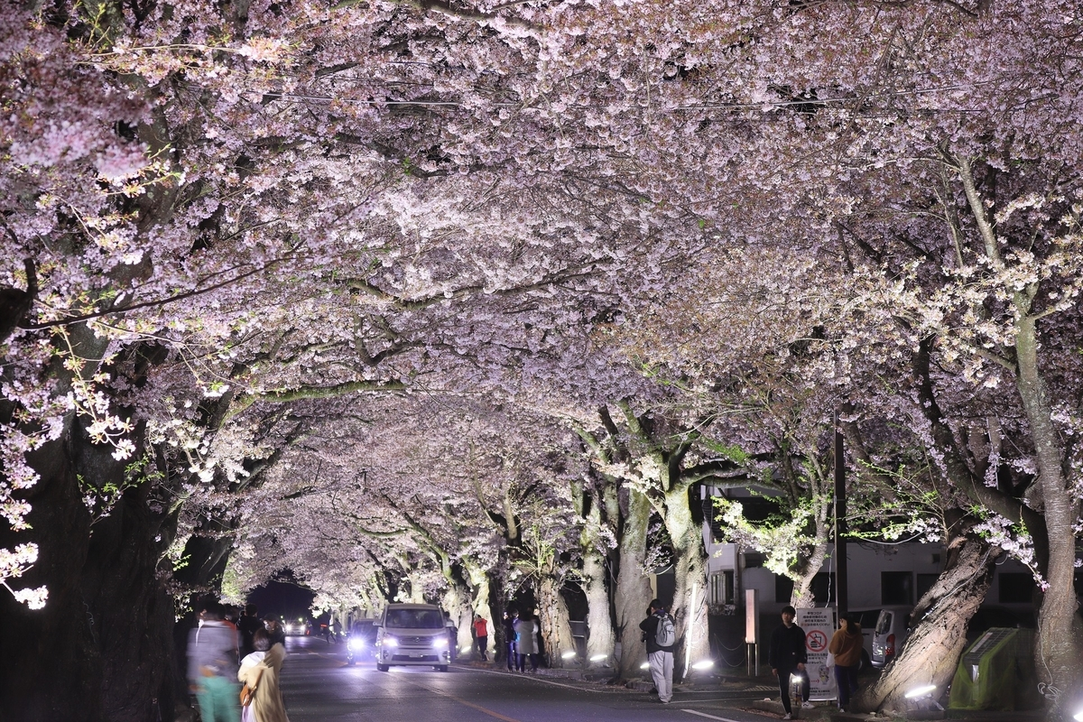 f:id:katayoku_no_hito:20210403195427j:plain