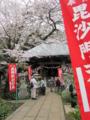 [八千代][春]正覚院@村上で桜を眺める。