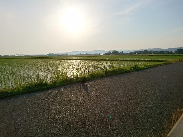 f:id:katoributa-sn:20180607214935j:image