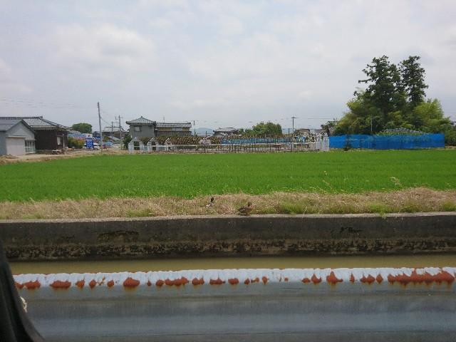 f:id:katoributa-sn:20190709200324j:image