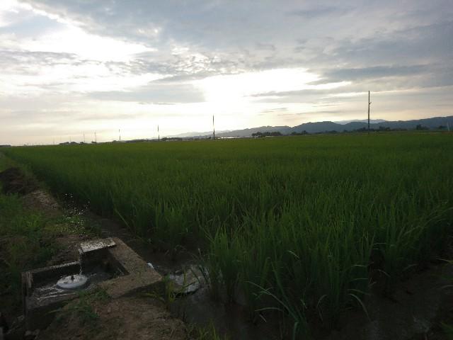 f:id:katoributa-sn:20190825094843j:image