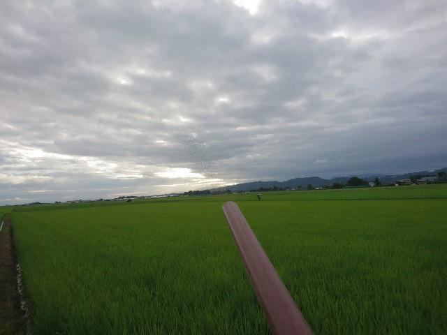 f:id:katoributa-sn:20191013105257j:image