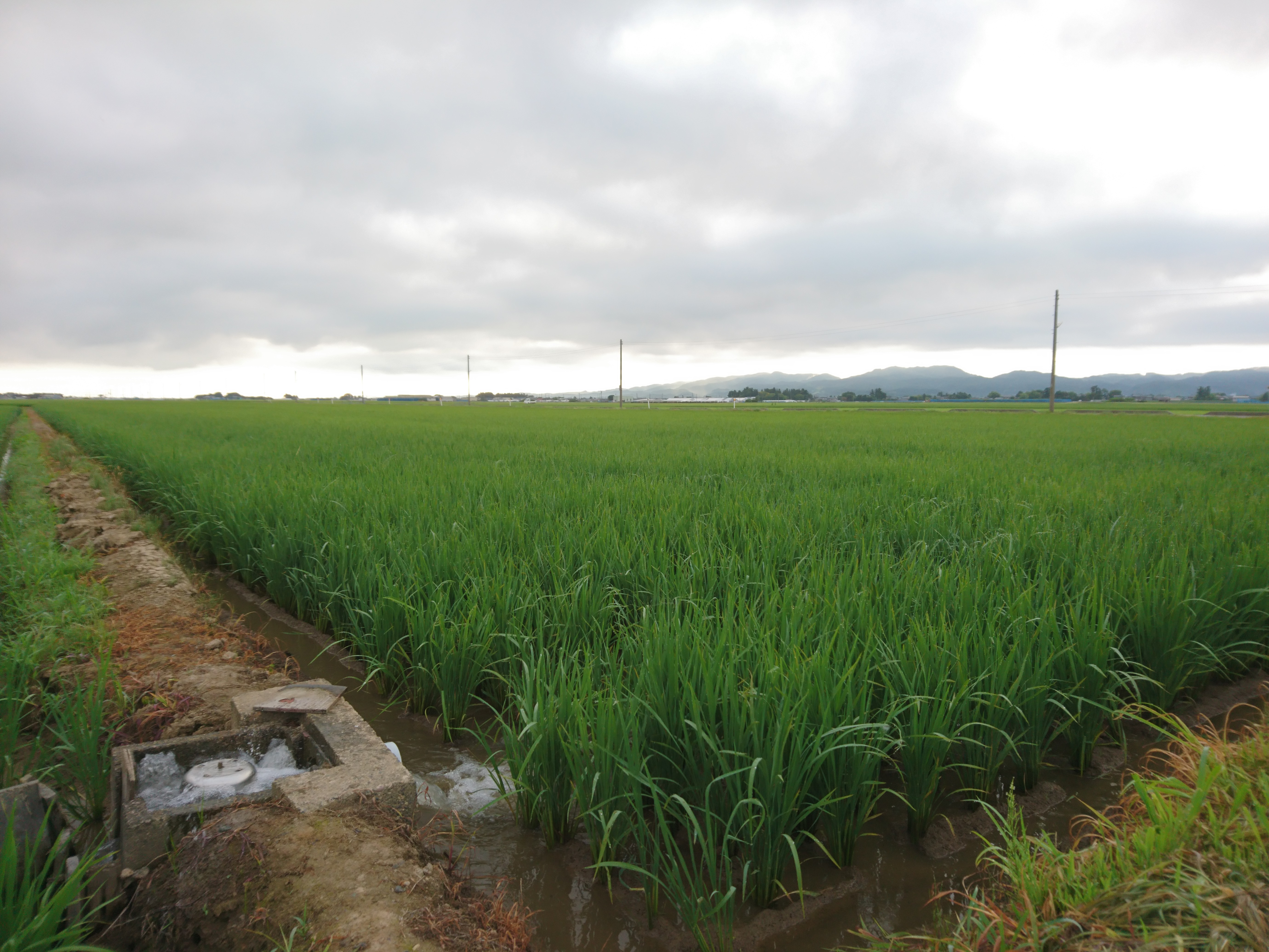 f:id:katoributa-sn:20200105100756j:image
