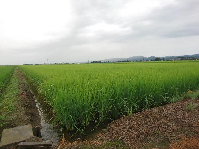 f:id:katoributa-sn:20200109215232j:image