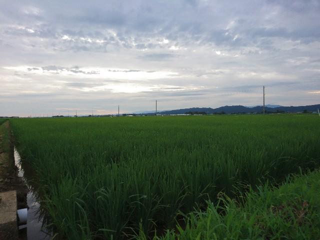f:id:katoributa-sn:20200118124632j:image