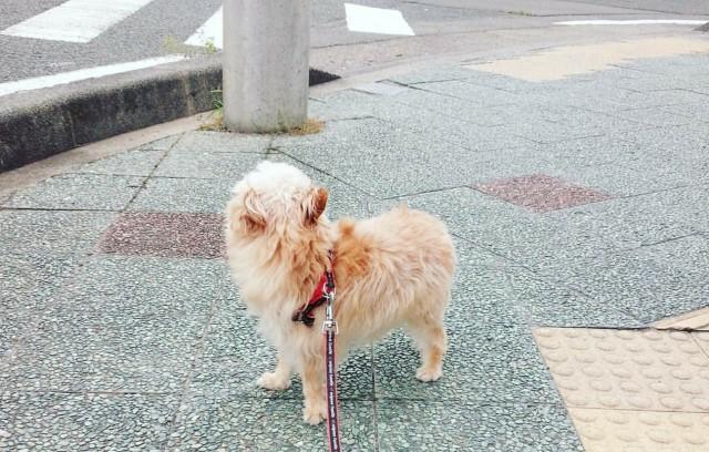 f:id:katorimasahiro:20171123180309j:image