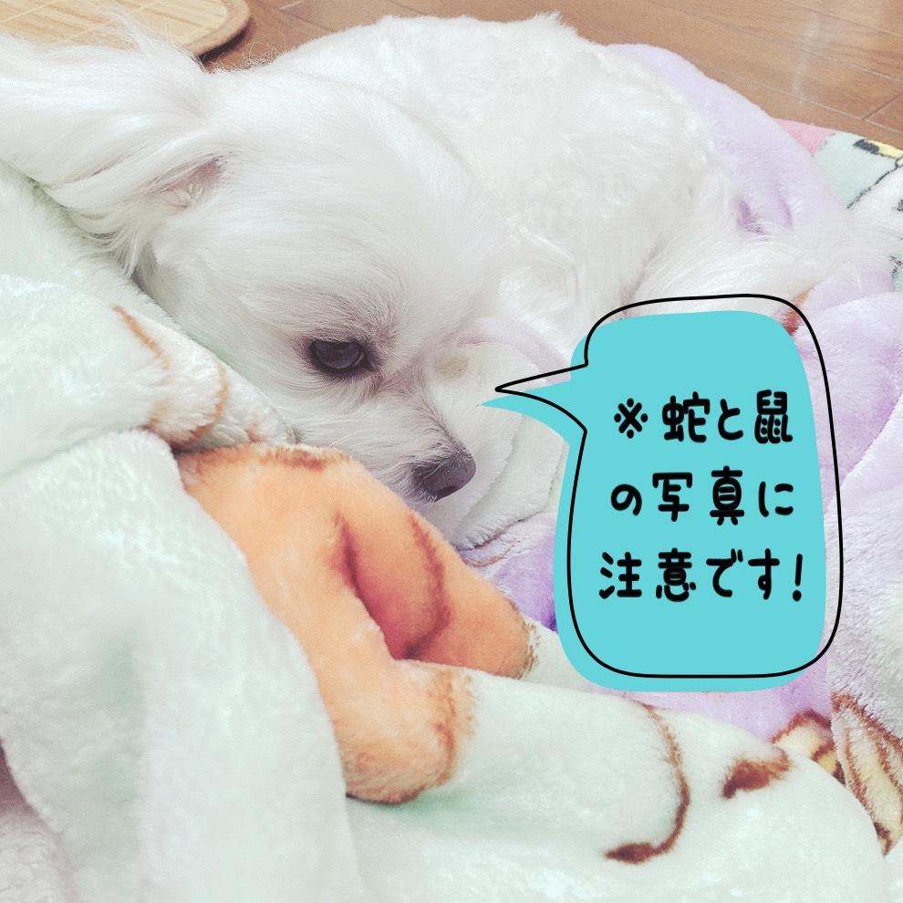 f:id:katsuma-pc:20201201120041j:plain