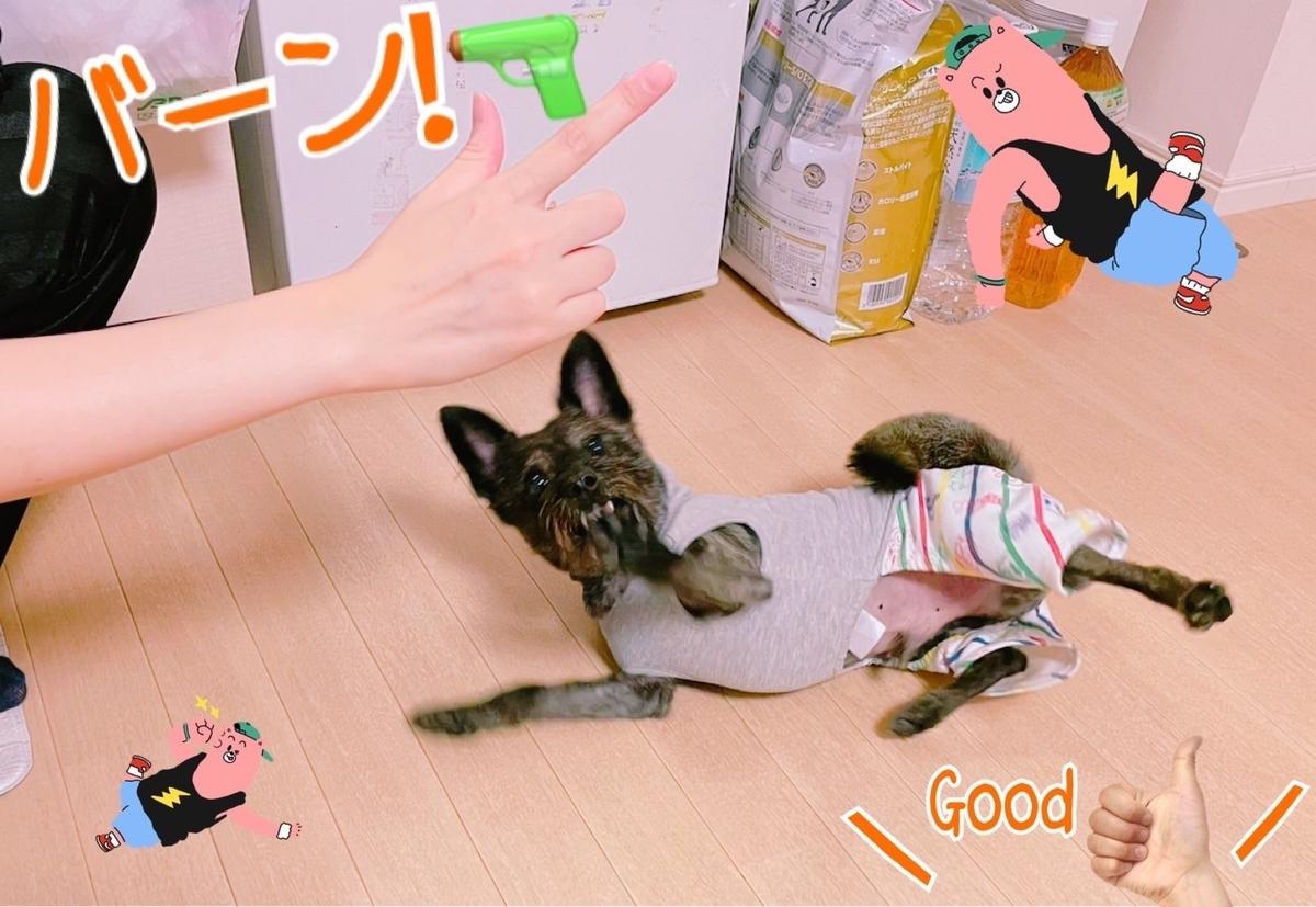 f:id:katsuma-pc:20211017174352j:plain