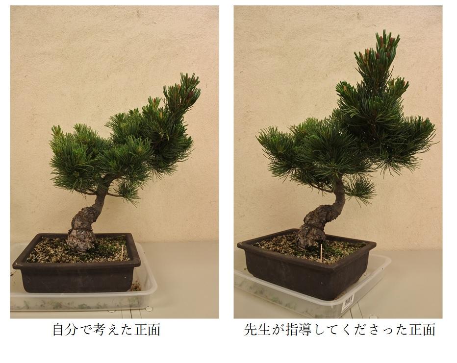 f:id:katsuo_24:20170606120543j:plain