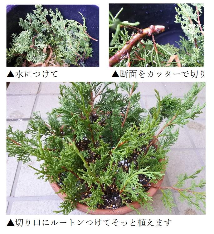 f:id:katsuo_24:20171124175713j:plain