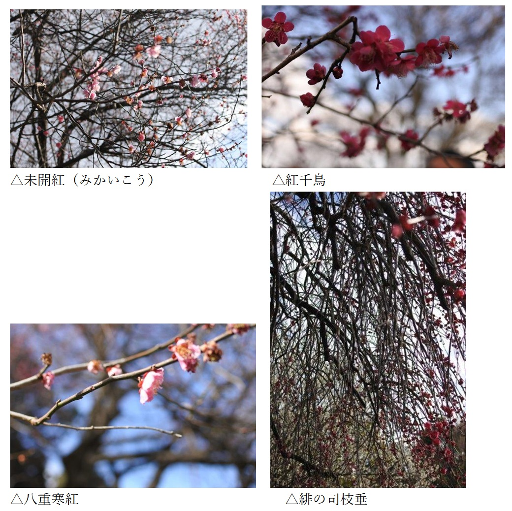 f:id:katsuo_24:20200301131158j:plain