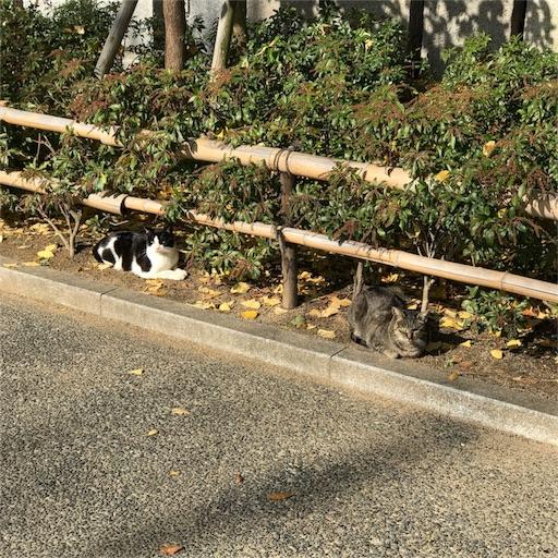 f:id:katsuyuki146:20161205175230j:image