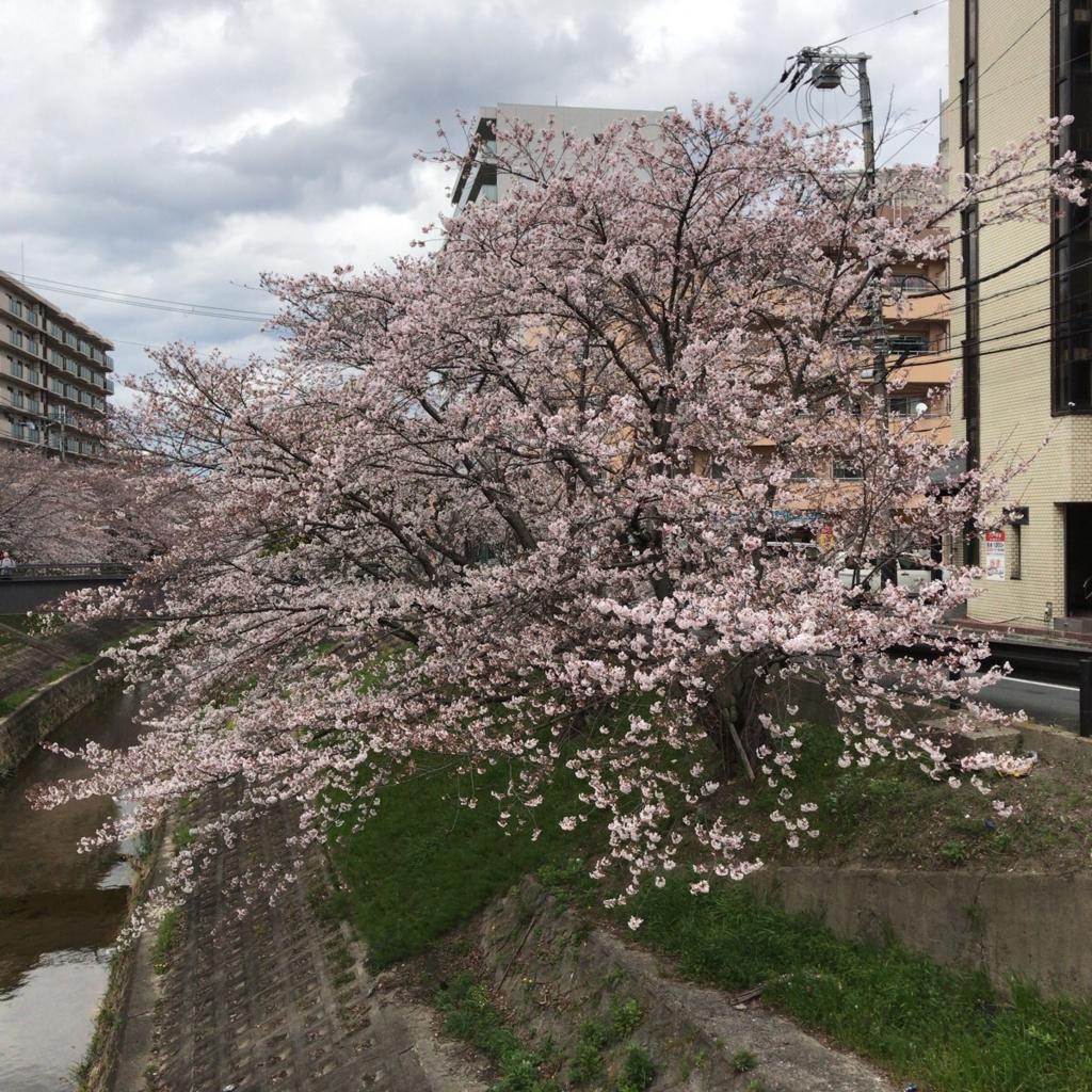 f:id:katsuyuki146:20170406140147j:plain