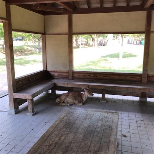 f:id:katsuyuki146:20170810232804j:image