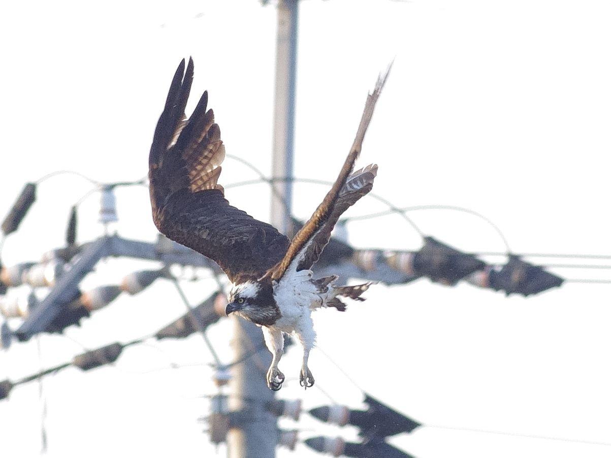 京都新聞写真コンテスト 朝飯に一直線