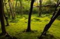 京都新聞写真コンテスト 祇王寺の苔と木々