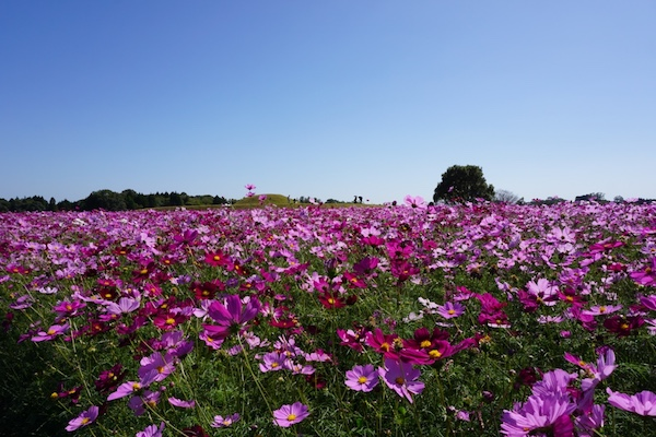 f:id:kawabatamasami:20161230131347j:plain