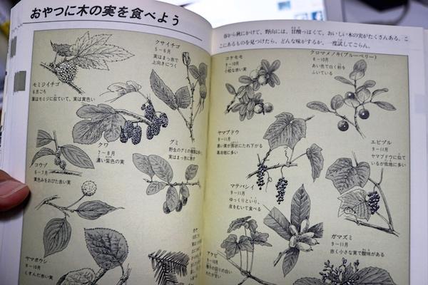 f:id:kawabatamasami:20170120111858j:plain