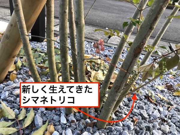 f:id:kawabatamasami:20171123151945j:plain