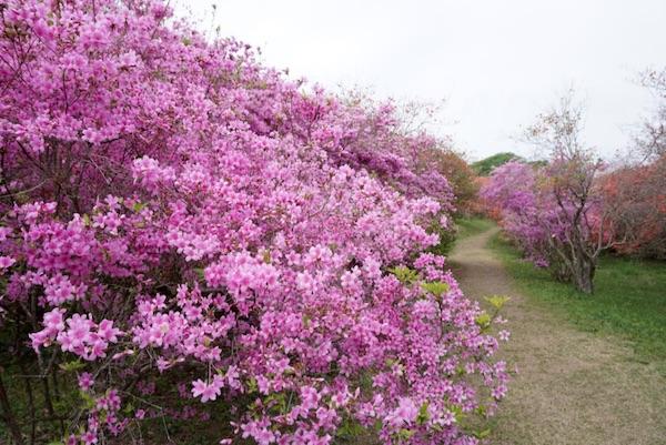 f:id:kawabatamasami:20180405150710j:plain