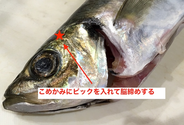 f:id:kawabatamasami:20200106103032j:plain