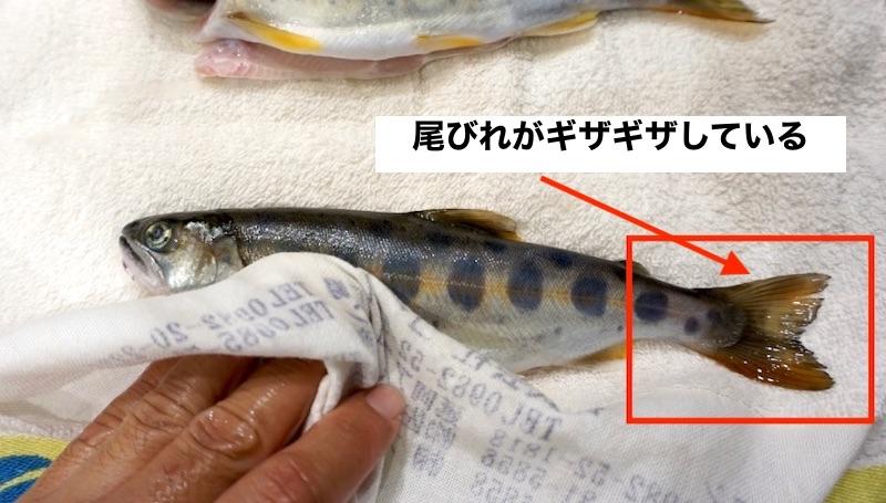 f:id:kawabatamasami:20200116222555j:plain