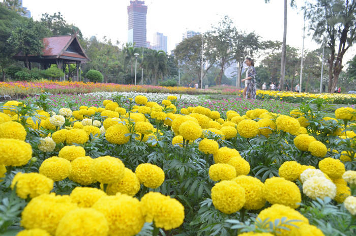 タイ・バンコクのルンピニー公園の紹介