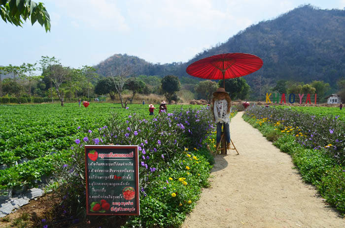 khao Yai Strawberry Farm