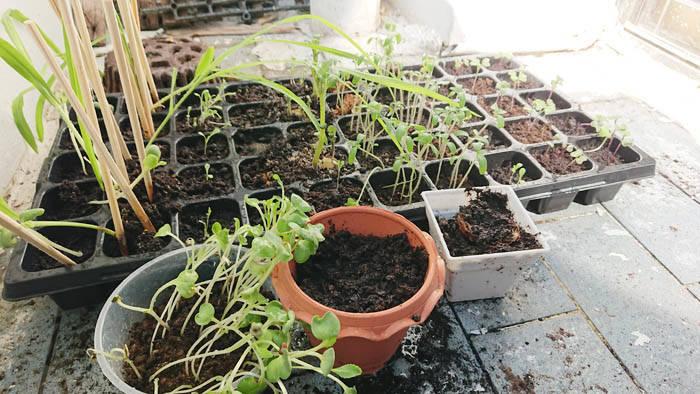 バンコクで家庭菜園をする方法