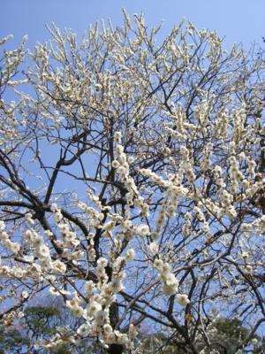 f:id:kawaiikuo:20100320103942j:image