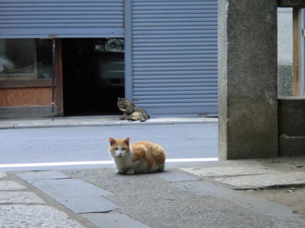f:id:kawaiikuo:20110702134840j:image:w640