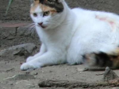f:id:kawaiikuo:20110702134917j:image:w640