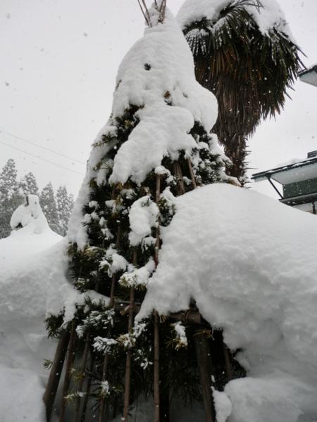 f:id:kawaiikuo:20120219132717j:image