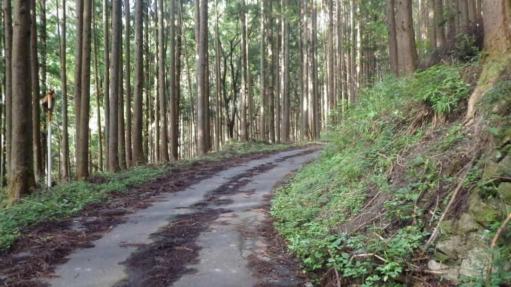 f:id:kawajima-zx14:20181103231608j:plain
