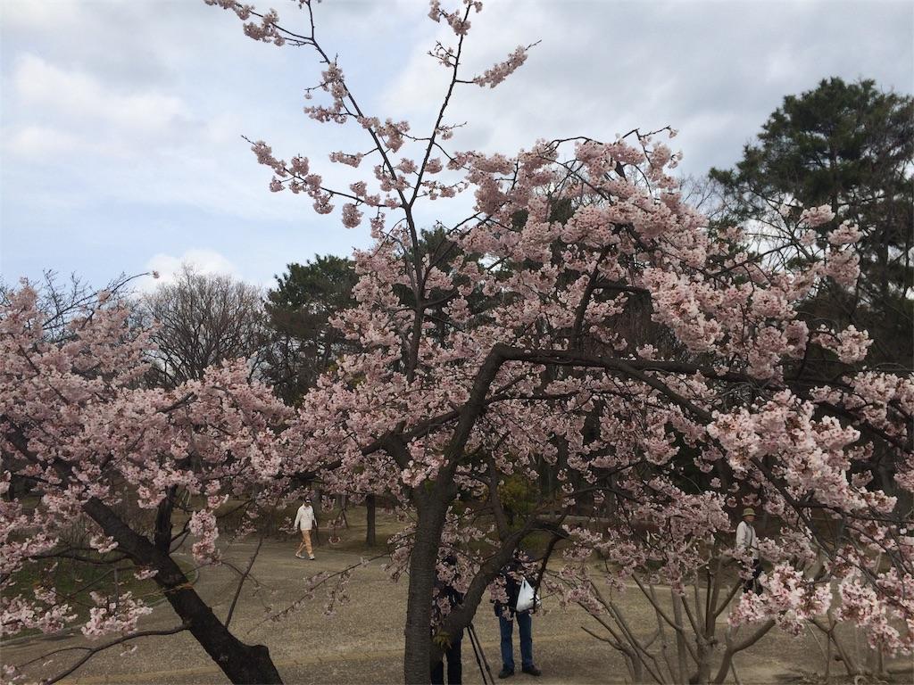 f:id:kawakawa2017:20170323012112j:image