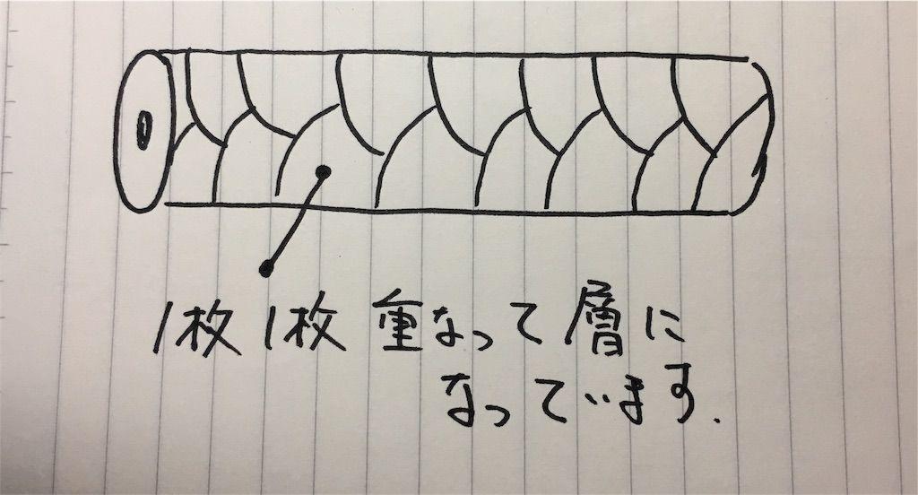 f:id:kawanabehiroki:20180506144641j:image