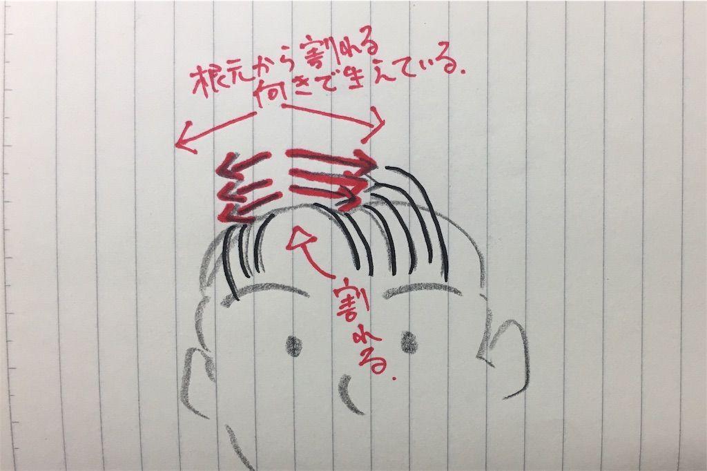 f:id:kawanabehiroki:20180516183221j:image