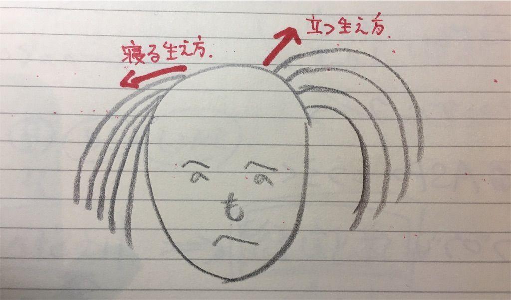 f:id:kawanabehiroki:20180705123202j:image
