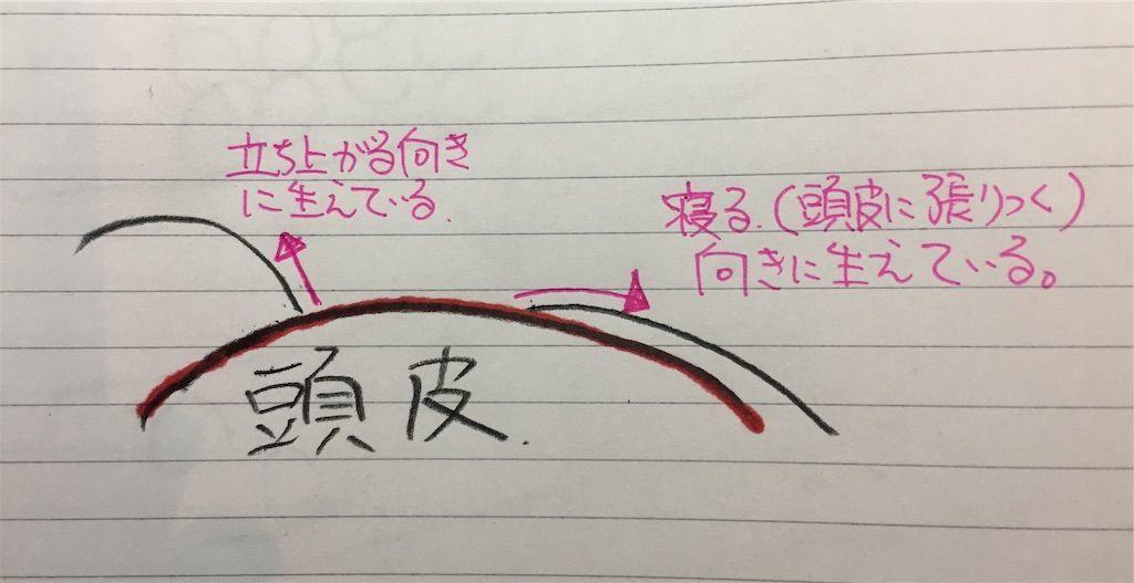 f:id:kawanabehiroki:20190517131505j:image