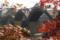 11/12(土)【山口県岩国市横山】 「錦帯橋」