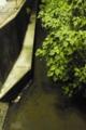 11/23(水) 【山口県岩国市麻里布町】 「水路」