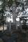02/16(木)【愛媛県伊予郡松前町南黒田】  「記念碑」