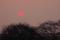 02/17(金)【愛媛県松山市西垣生町】  「夕日」