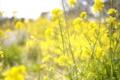 03/04(土)【愛媛県伊予市下三谷】 「黄色」    V35