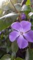 04/02(日)【愛媛県新居浜市新須賀町】  「紫」    Zen