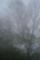 05/06(土)【愛媛県東温市河之内】 「霧」 V35