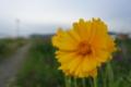 05/15(月)【愛媛県伊予市下三谷】  「野花」  Rx