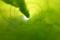 06//30(金 )【愛媛県伊予市下三谷】  「巻物」  Rx